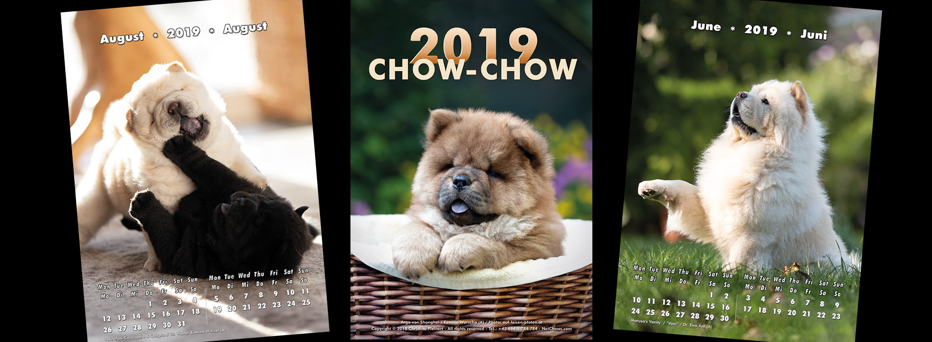 NetChows is proud to present the Chow-Chow Calendar 2019