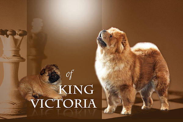 of King Victoria Chow-Chows