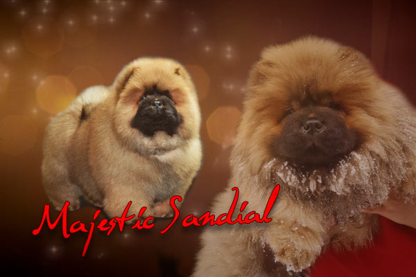 Majestic Sandial Chow-Chows